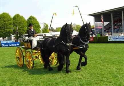 George Fawcett Carriages - Sporting Dog Cart